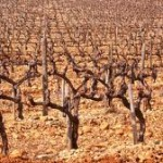12-21-wine-grapes