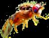Medfly-alone