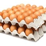 fresh eggs in tray
