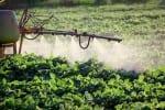 Spraying of field