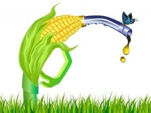 analysis renewable fuel biofuel corn stalk ethanol gas pump