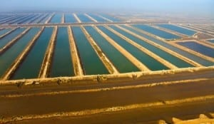 Aquaculture research