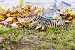 fall leaves with fan rake on lawn