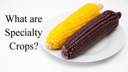 what-are-specialty-crops