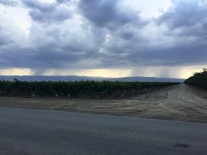 Lightning and rain over the Coalinga Hills. Courtesy: Jason Hallenburg