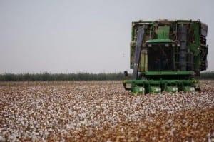 Cotton Tour