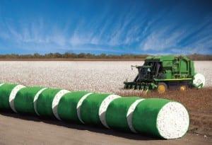 American cotton