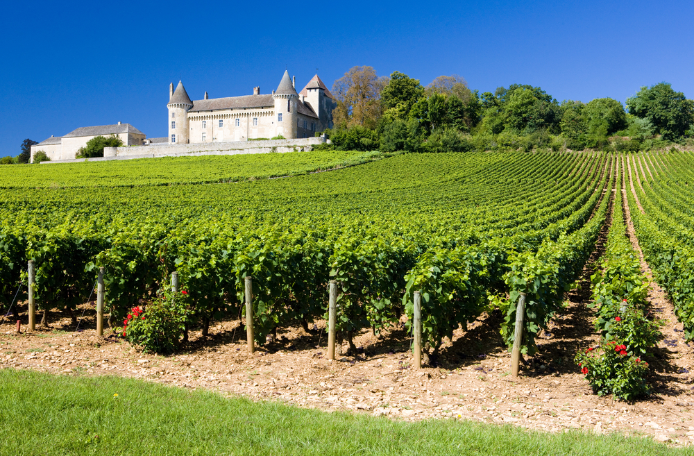 Climate change wine southeast agnet - The splendid transformation of a vineyard in burgundy ...