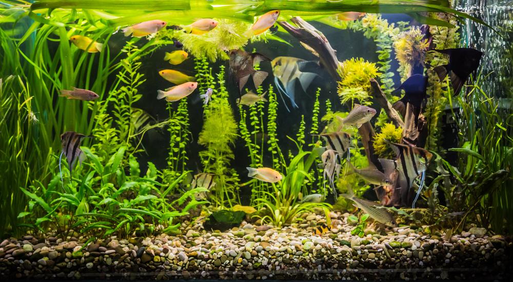 wandaquarium aquarium komplett set