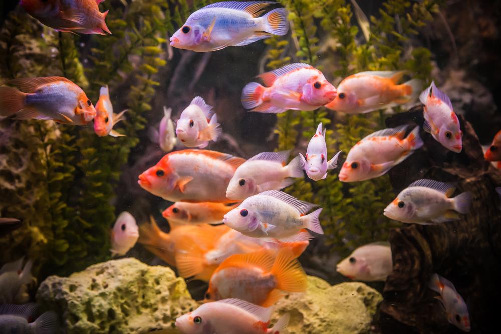 Ornamental fish southeast agnet for Ornamental fish tank