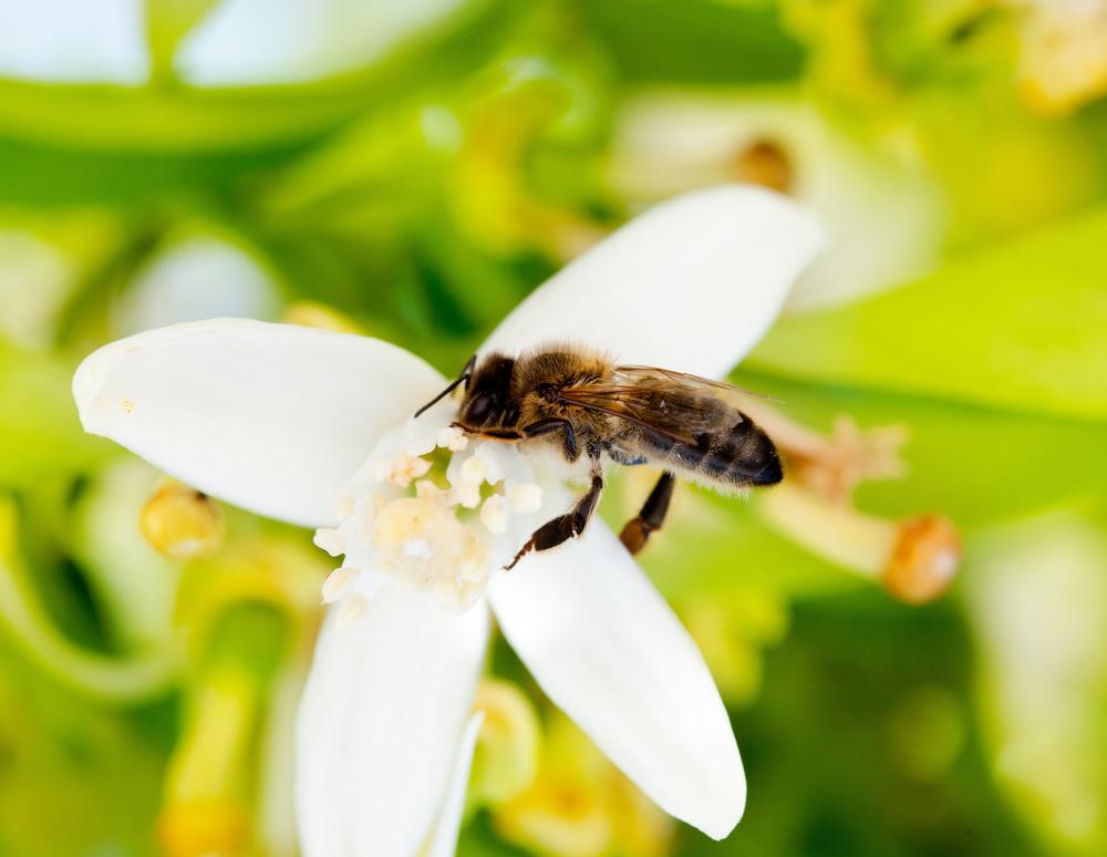 pollination