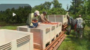 AFBF-Farm-Labor-Shortage-Ve