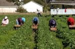 farm labor shortage