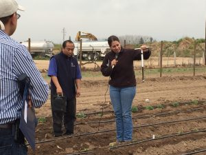 UCCE advisor Ruth Dahlquist-Willard (right) demonstrates how to evaluate soil moisture with a soil sampler. In the center is UCCE Hmong ag assistant Michael Yang.