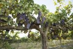 Shutterstock image plants