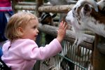 farm theme parks-petting zoo
