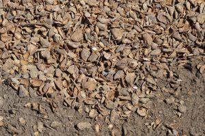 Almond Waste