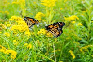 Pollinator Populations