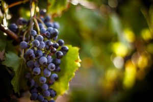 Grape Prices