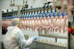 poultry labor