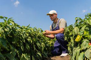 Beginning Farmer Training