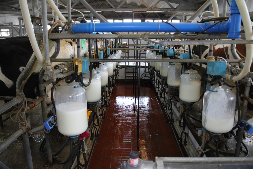dairy margin