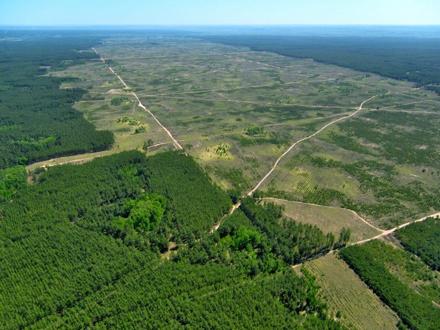 Deforestation. (Aerial view).