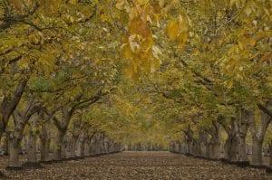 California walnut marketing order