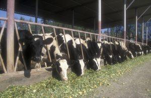 Improving Livestock Digestion