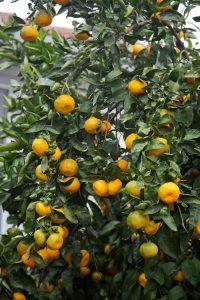 California Citrus Network