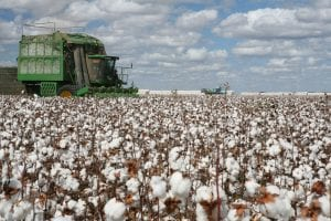 planted cotton acreage