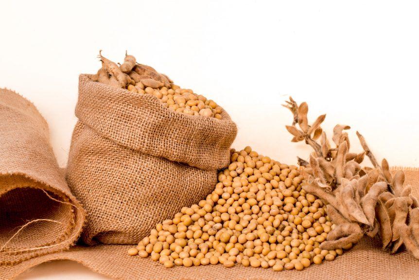 seed company