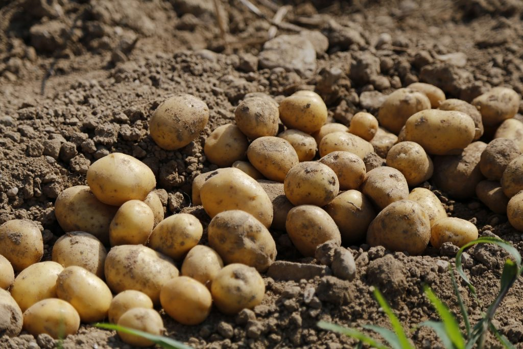 Potato Industry Thanks Secretary Perdue for Supporting
