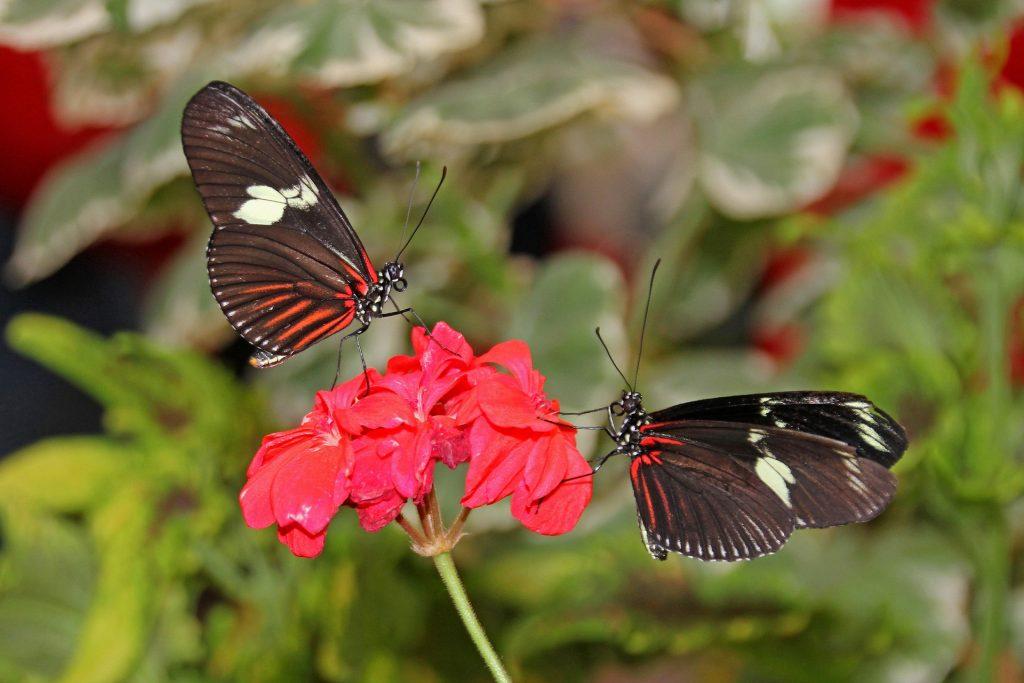 Program to Promote Pollinator Health Hits Milestone | AgNet West
