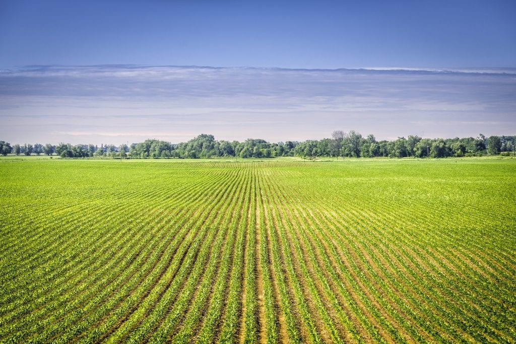 Organic Certification Cost