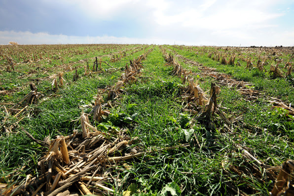 USDA Adds Flexibility for Cover Crop Management in Crop Year 2020 |