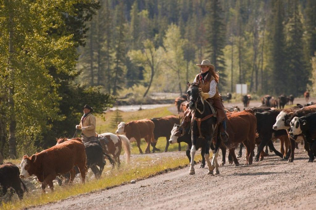ranch income