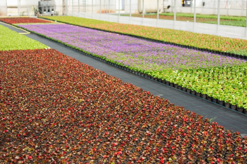 specialty crops