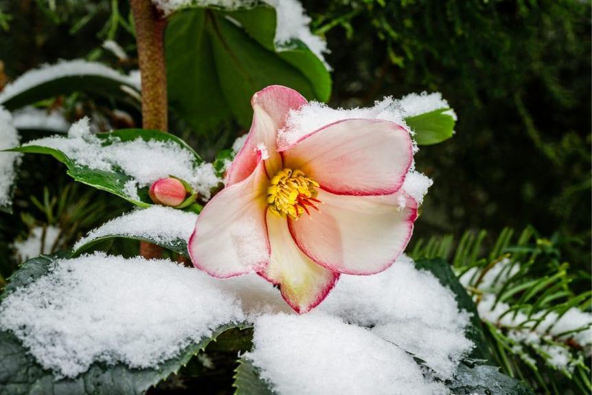 wintertime flower